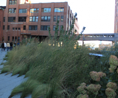 The High Line: An Urban Garden in NYC