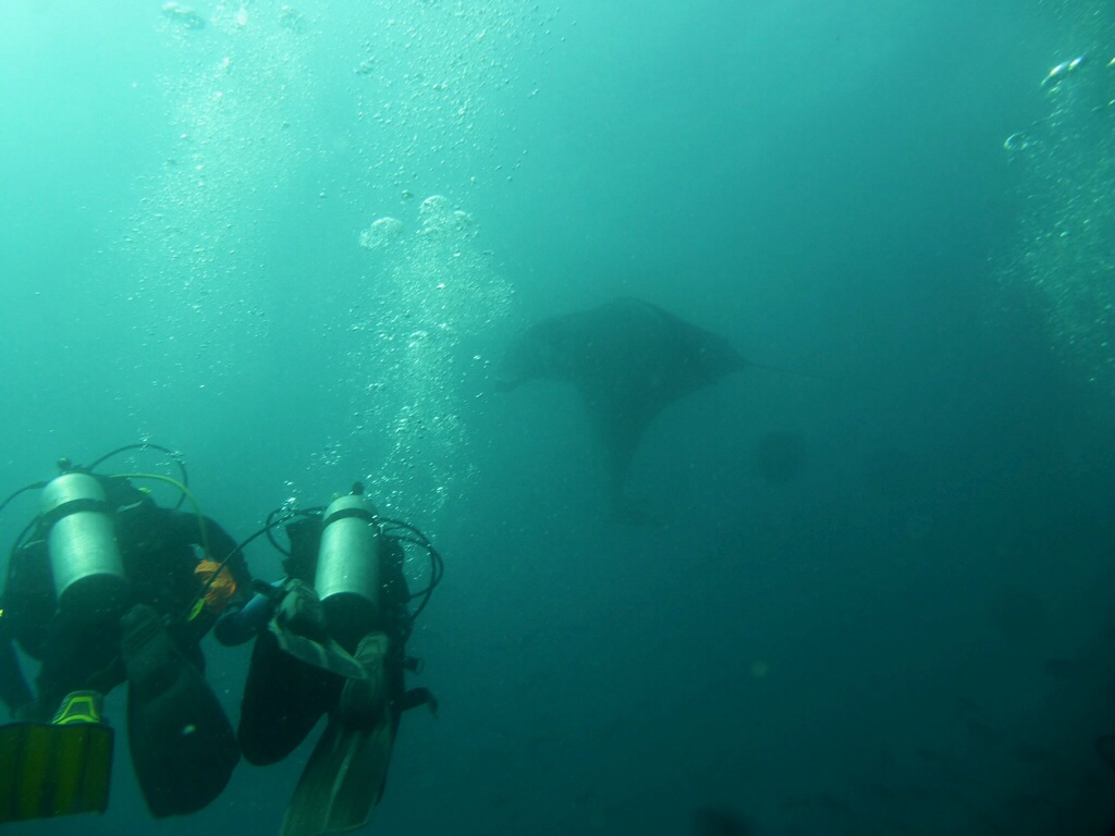 Scuba diving with manta rays off Turtle Island
